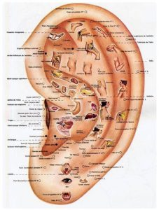 Ear Reflex Points