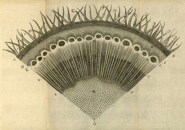 plate 3 - grews anatomy of plants